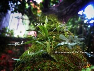 ny6 image.grow2